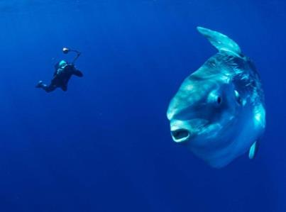 Mola Mola with Tulamben Wreck Divers